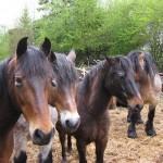Pferdestärken