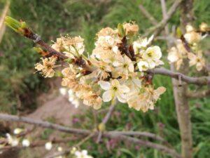 Read more about the article Frostnächte im April