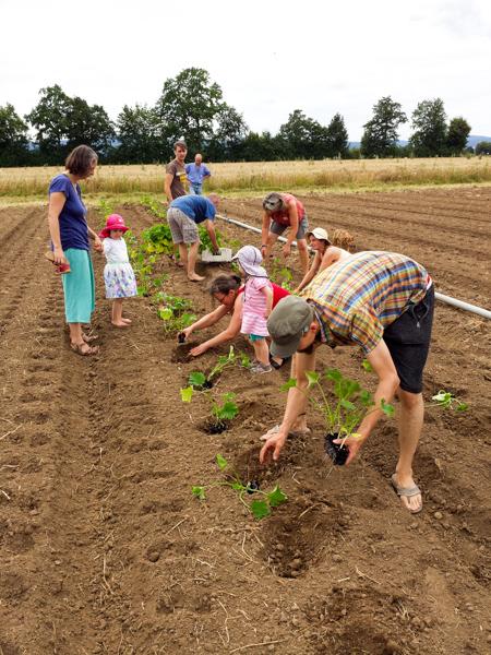 Gemüse-Lieferung vorbereiten